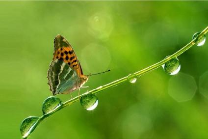 Natürliche Ressourcen sparen mit der spring-time Wasseraufbereitung